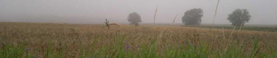Blog-Bild Herbst 5