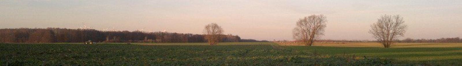 Blog-Bild Frühling 3