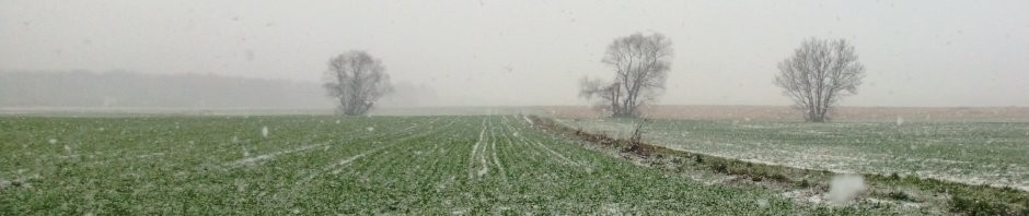 Blog-Bild Winter