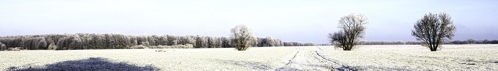 Blog-Bild Frühling