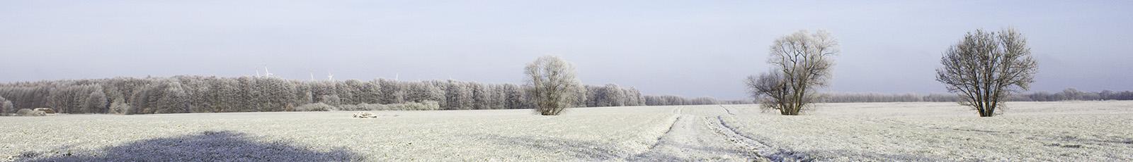 Blog-Bild Frühling 2